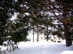 Snowy scene through the trees...