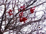 Color in the dead of Winter...
