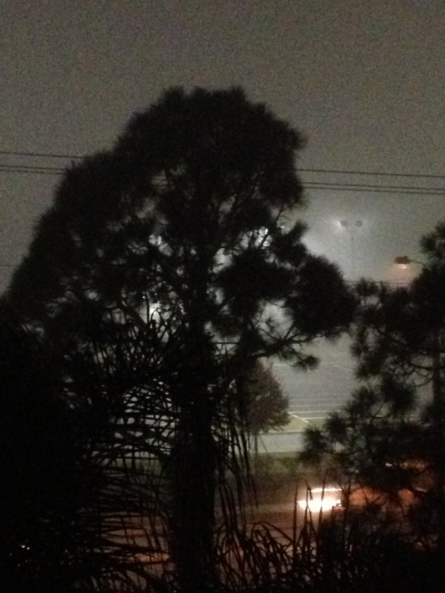 A tall tree in the foggy night.