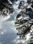 A look up at the clouds...